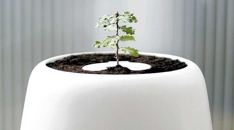 После смерти в США можно стать деревом